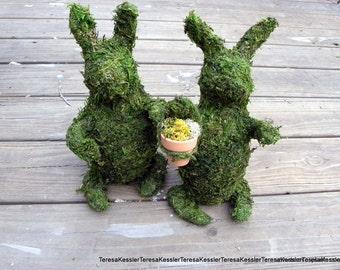 2 Moss covered Rabbit-Eater Bunny-Rabbit sculpture-Preserved Moss-