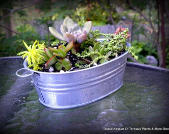 Colorful succulents & sedum Garden Bathtub of Galvanized Tin- Sedum and succulent planter