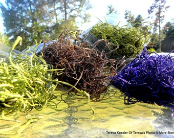 Spanish Moss preserved-2 oz bag-violet-purple-coffee-chartreuse and more