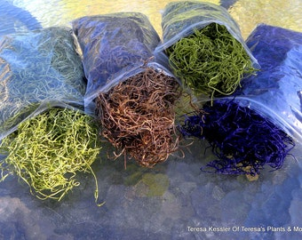 Spanish Moss 16 oz Preserved-Purple Spanish Moss-Coffee Spanish Moss-Violet-Dusty Rose-Fuchsia-Chartreuse