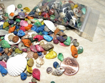 Colorful and Miniature polished shells for terrariums-Vivariums-Weddings-Craft Projects and More 2x3 bag