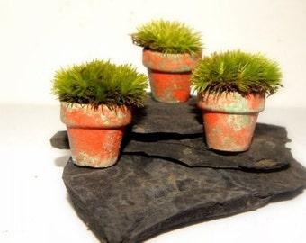 Live moss-Miniature Terra Cotta Moss Pots-Set of 3 small Pots with live Pillow Moss