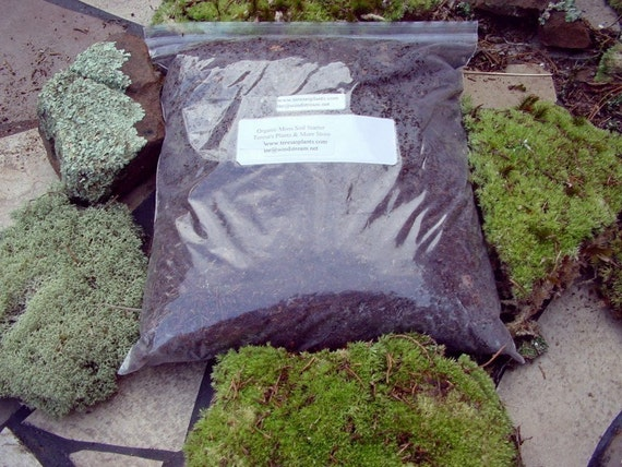 Organic soil for moss-Stuffed Qt Bag full-Terrarium Soil