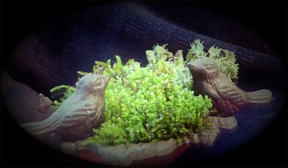 Moss Handbook-DIY Terrarium Book-Moss Care-Lichen Care-Hints & Tips-Also a list of over 60 plants to use in Terrariums