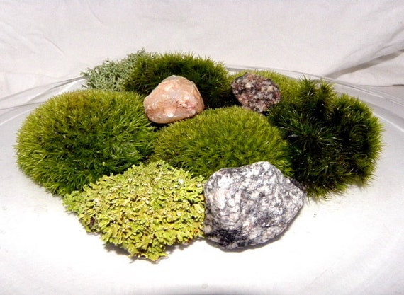 Simple Terrarium Moss and Minerals Add On Kit-Over 10 square inches