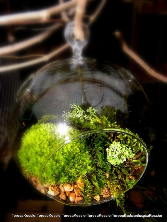 Hanging Glass Globe DIY Moss Terrarium Kit-Live Assorted Moss -Lichens & Glass ball included-Wedding Decor