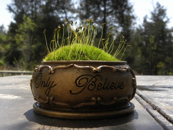SALE-Only Believe with my Golden Pot of Mood Moss open style terrarium- Woodland forest mood moss