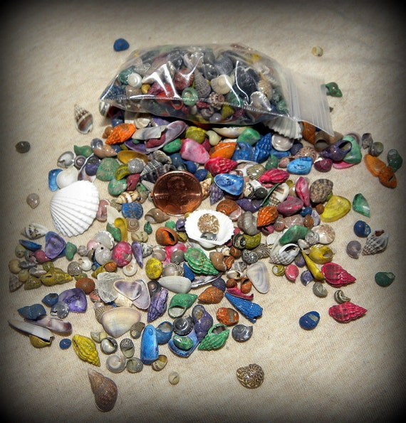Sea shells colorful and miniature shells for terrariums for Tiny shells for crafts