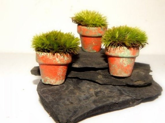 Slate & Moss-Miniature Terra Cotta Moss Pots-Set of 3 small Pots with live Pillow Moss and a Piece of slate to set them on