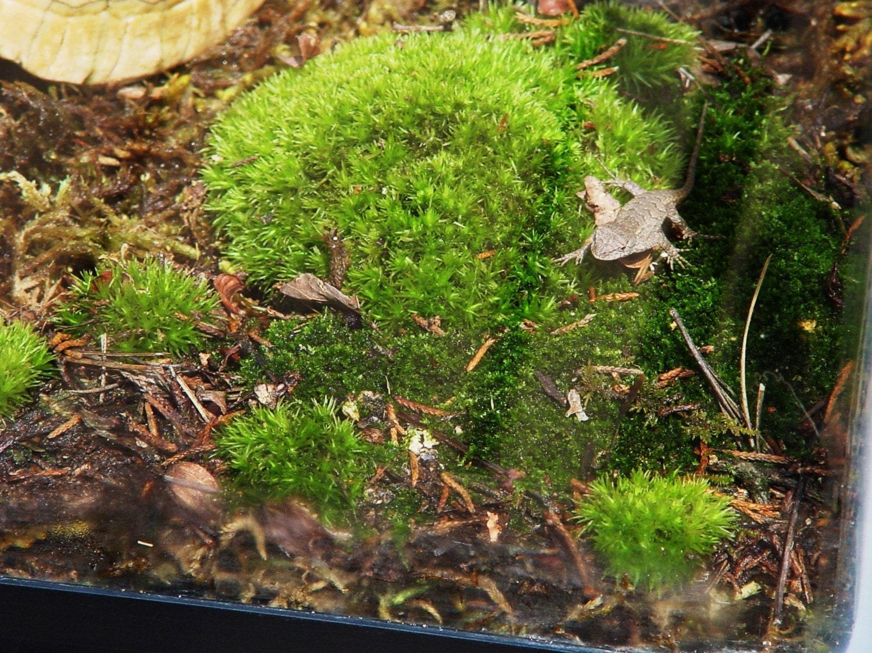 Terrarium soil organic soil for moss sandwich bag full for Organic soil for sale