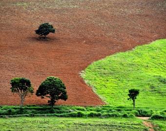 Brazil photograph. Trees 1, Minas Gerais, Brazil. 8x12