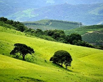 Brazil photograph. The Hills are Alive. Trees 2, Minas Gerais, Brazil 8x12