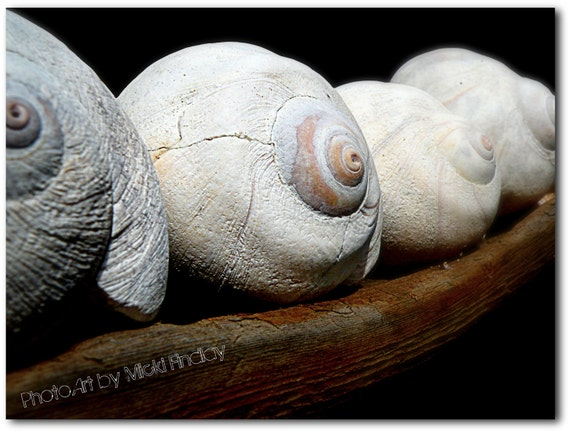 Moon Shells - 8x10 Fine Art Photo Print
