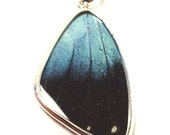 REAL BUTTERFLY WING PENDANT NECKLACE JEWELRY LARGE STERLING SILVER MORPHO DEIDAMIA