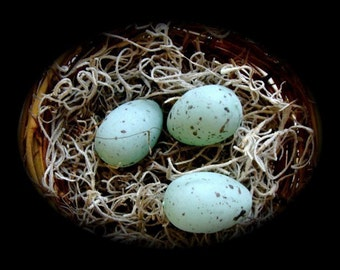 Beautiful Realistic Robin Eggs