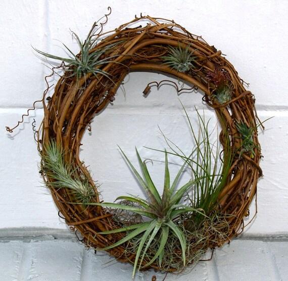 Air Plant Grapevine Wreath