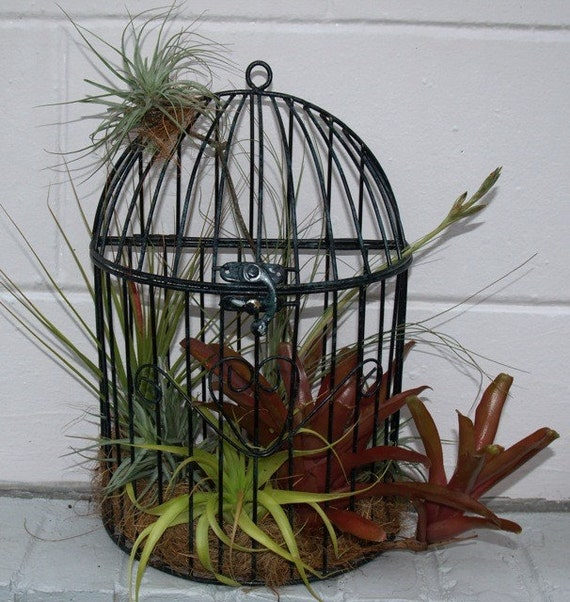 Wall Bird Cage Air Plant Arrangement Antique By