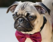 Dog Bow Tie Collar Cranberry Wedding Photo Prop