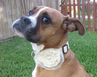 Dog Collar and Flower Bow Rossette Yellow Wedding Photo Prop