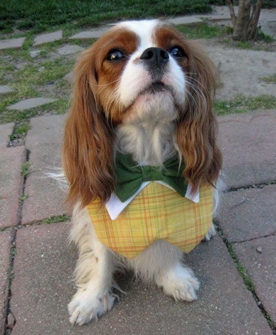 Dog Collar Bow Tie Yellow Plaid