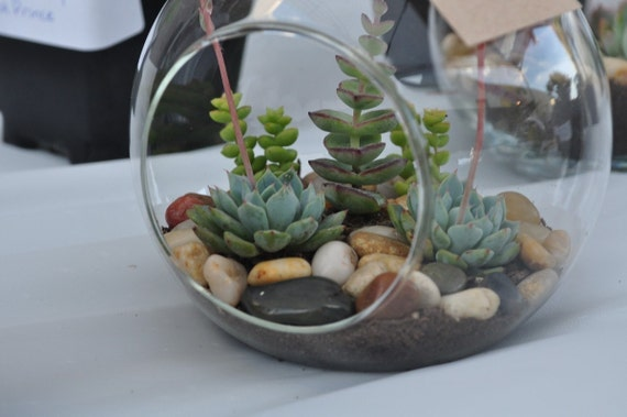 Succulent Terrarium Sunny - Through the Looking Glass... A Sun Loving Mysterious Hanging Succulent Terrarium Orb