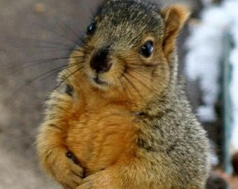 Friendly Squirrel Unframed Original Fine Art Photograph