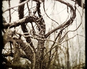 Tangled Forest in muted greys - Fine art Photograph