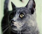 The Cats Meow - 8X12 Fine Art Print