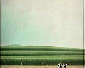 Animal Photography, Farm, Cow, Country Home Decor - Mariella - 8x8 Signed Print by Tina Crespo Philadelphia Photographer