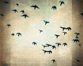 Whimsical Bird Photography, Sky, Abstract Texture - One for the Birds - 12x12 Original Signed Print by Tina Crespo Philadelphia Photographe