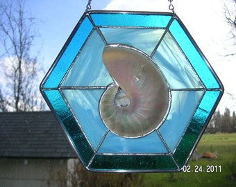 Sliced Nautilus Seashell Window in Aqua