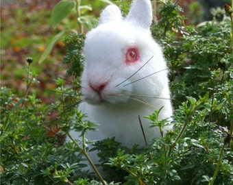 OOAK Needle felted Alpaca Life Size Baby Bunny Rabbit Poseable White albino w red glass eyes Free shipping