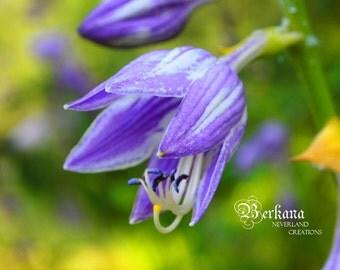 Spring Splendor, Rebirth, Renew, and Fine Art Print Original Dreamy Wonderland