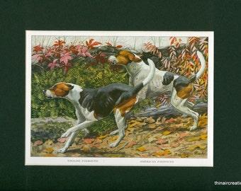 1919 English and American Foxhound Dog Vintage Print