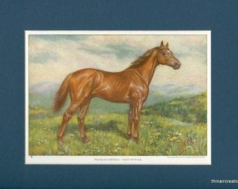 1923 Vintage Racing Thouroughbred Horse - Man of War Print