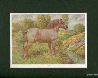1923 Vintage Beligan Work Horse Farm Animal Print