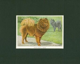 1919 Vintage Chow-Chow Dog Print