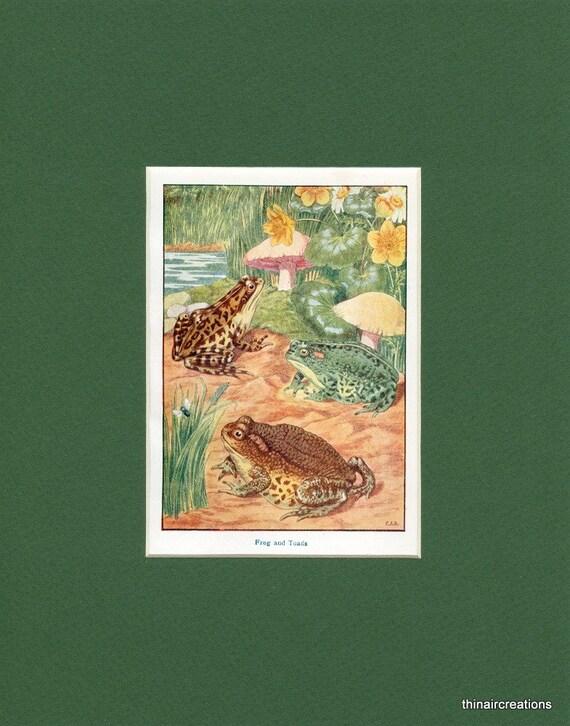 Frog and Toads - circa 1900's Natural History Print