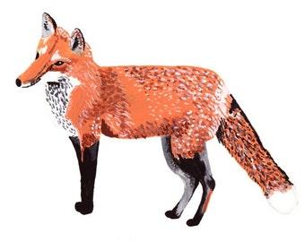 Red Fox 5x7 Print