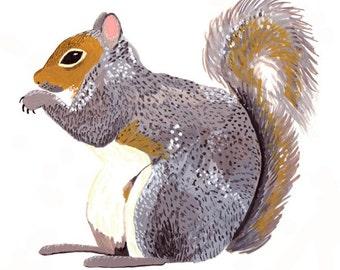 Gray Squirrel 5x7 Print