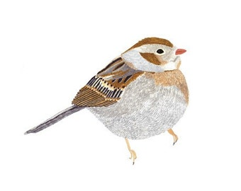 Field Sparrow 5x7 Print