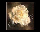 White Rose Note Cards Set of 6