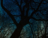 Night Descends on the Mountain with Cyanotype