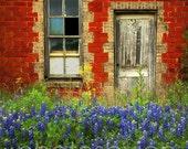 Beauty and The Door- 8 x 11 signed original photograph - Texas Wild Flowers Landscape, Award Winner