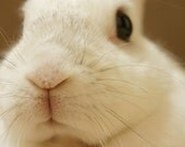 Bunny Treats-All-Natural Organic Treats for Rabbits, Full of Fruits and Vegetables-6oz
