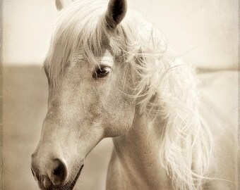 Horse Photograph -Palomino Portrait - Fine Art Print - 8x8 - Animal photography - Palomino Study 1
