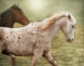 8X8 METALLIC PRINT - Horse Photograph - Horse Portrait - Fine Art Print - Animal photography - Chuck & Red Fog Study 1