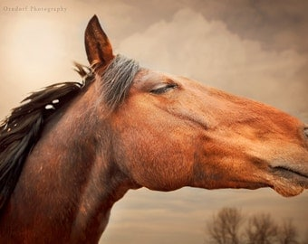 RED RISING - Horse Photography - 8x12 Fine Art Print