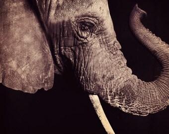 Elephant Skin - 8x8 Fine Art Print - Animal Portrait