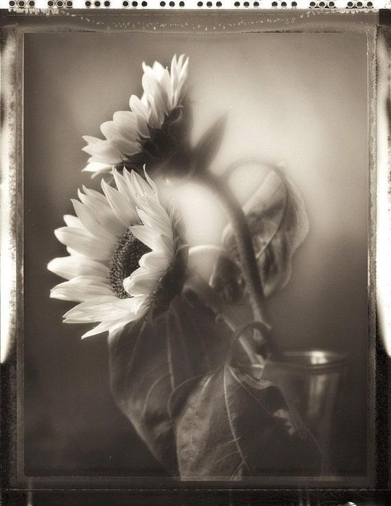 Sunflower Study 01